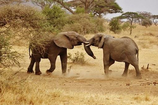 elephant-babies-278525__340.jpg