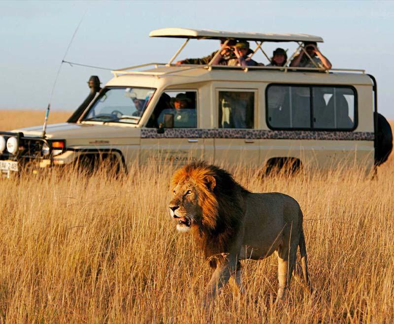 Safari-Tsavo-Est-e-Amboseli-5.jpg
