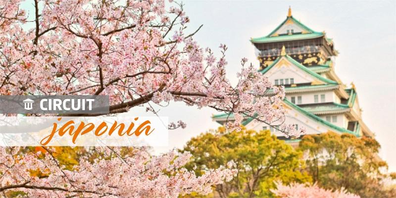 Japonia_Spectacolul florii de cires.jpg
