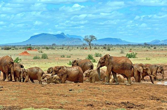 elephants-tsavo-east.jpg