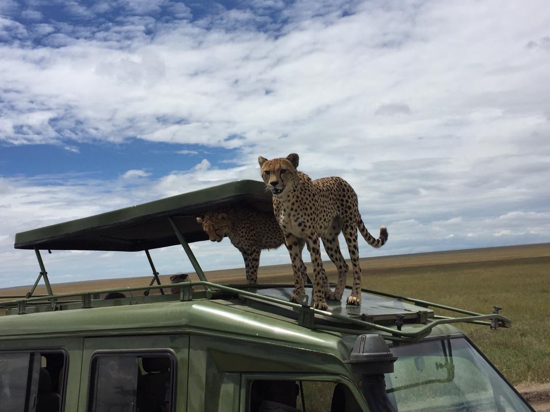 aqs_cheetah_on_vahicle7 (1).jpeg