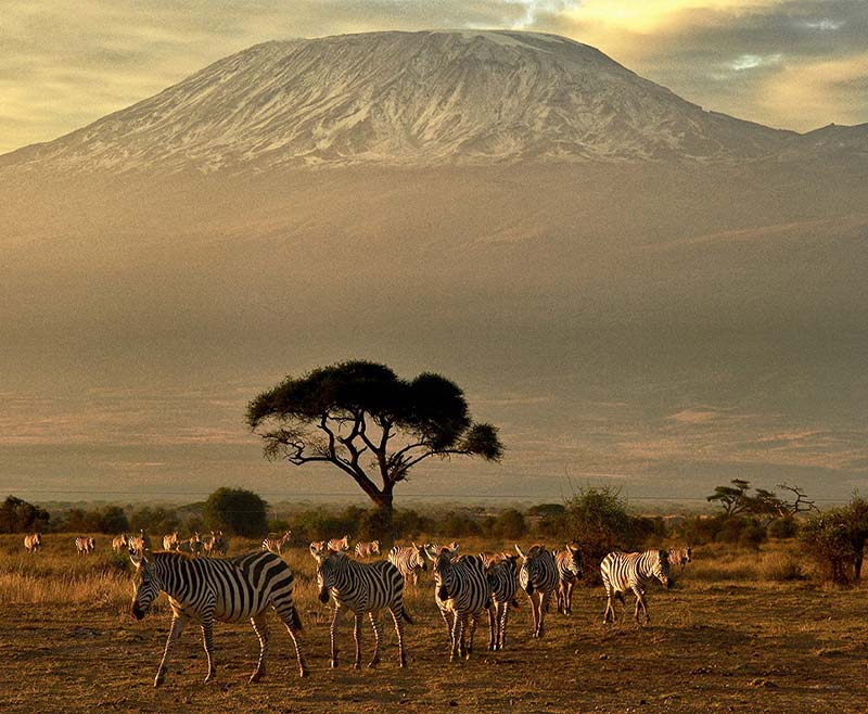 Safari-Tsavo-Est-e-Amboseli-2.jpg