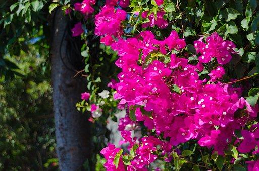 triple-flower-1572584__340.jpg