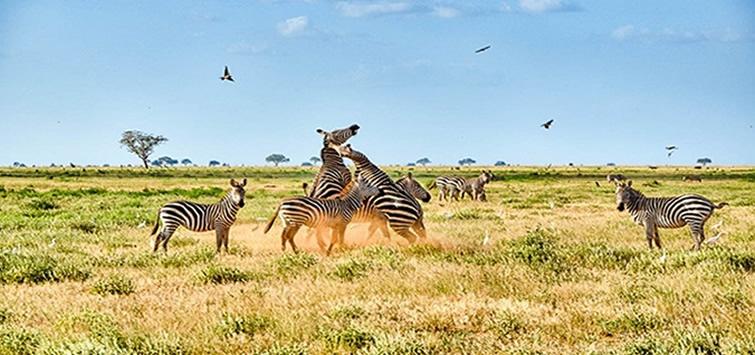 tsavo-east-safari-from-malindi1.jpg