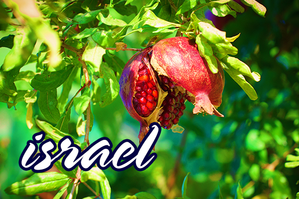 B2B-Israel-04.jpg