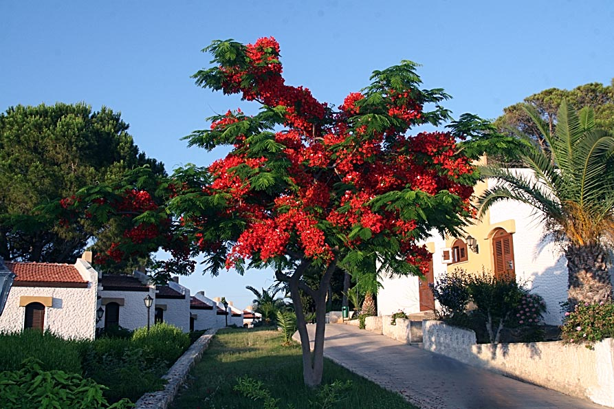 Acapulco2.jpg