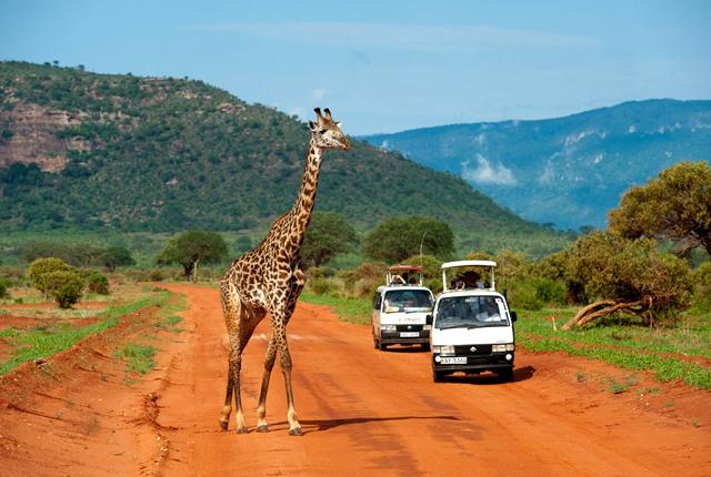 Giraffe-in-Tsavo-East.jpg