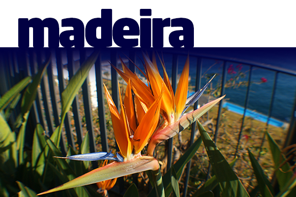 B2B-Madeira-04.jpg