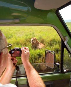 2020-03-16-at-18.33.24-lion-tanzania-246x300.jpeg